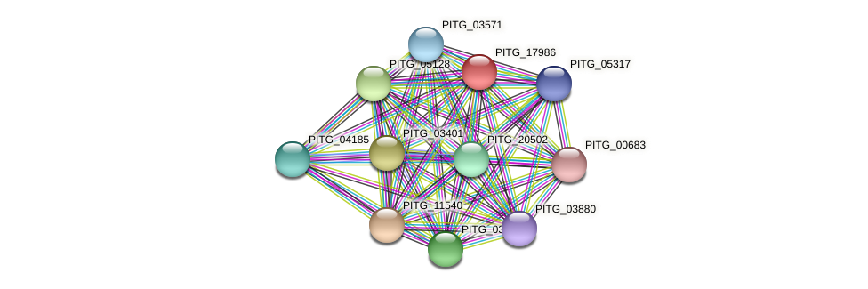 PITG_17986 protein (Phytophthora infestans) - STRING interaction network