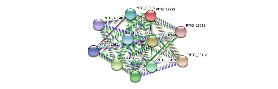 PITG_17999 protein (Phytophthora infestans) - STRING interaction network