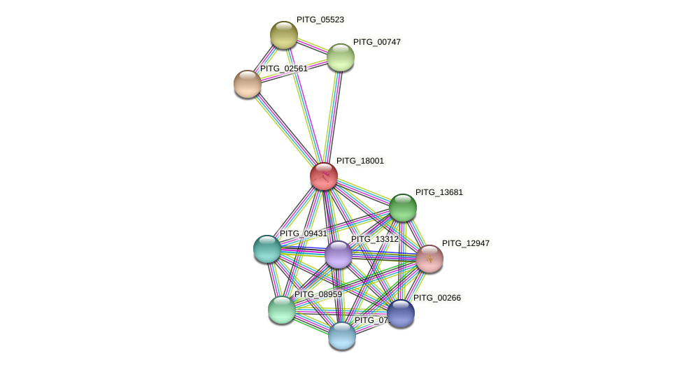 PITG_18001 protein (Phytophthora infestans) - STRING interaction network