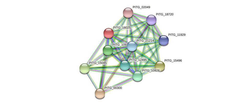 PITG_18025 protein (Phytophthora infestans) - STRING interaction network