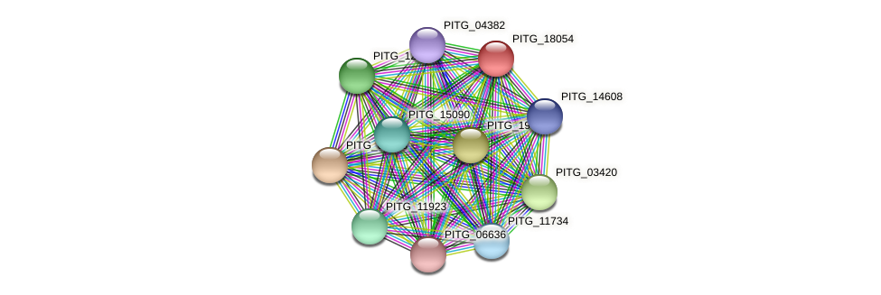 PITG_18054 protein (Phytophthora infestans) - STRING interaction network