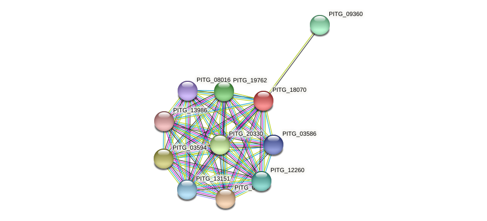 PITG_18070 protein (Phytophthora infestans) - STRING interaction network
