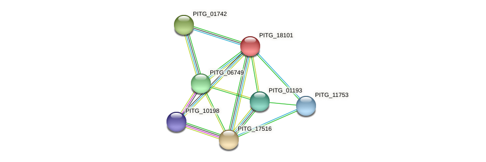 PITG_18101 protein (Phytophthora infestans) - STRING interaction network