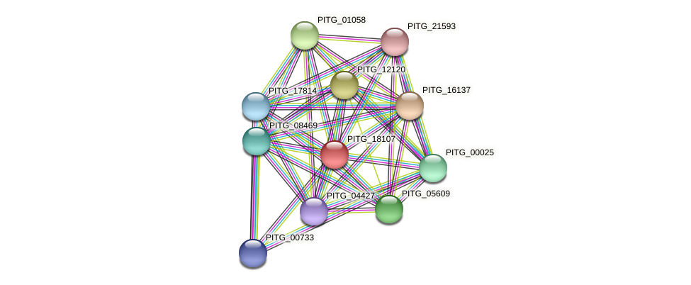 PITG_18107 protein (Phytophthora infestans) - STRING interaction network