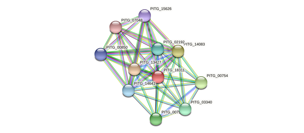 PITG_18311 protein (Phytophthora infestans) - STRING interaction network