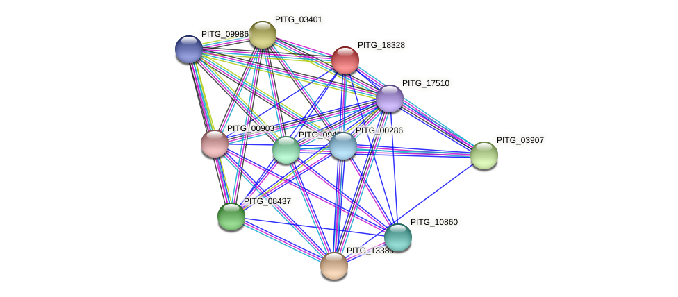 PITG_18328 protein (Phytophthora infestans) - STRING interaction network
