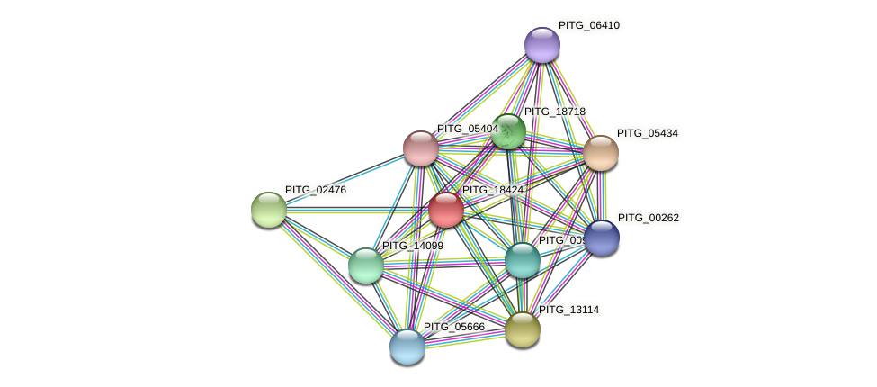 PITG_18424 protein (Phytophthora infestans) - STRING interaction network