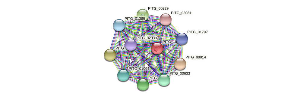 PITG_18446 protein (Phytophthora infestans) - STRING interaction network