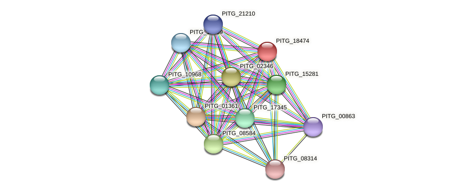 PITG_18474 protein (Phytophthora infestans) - STRING interaction network