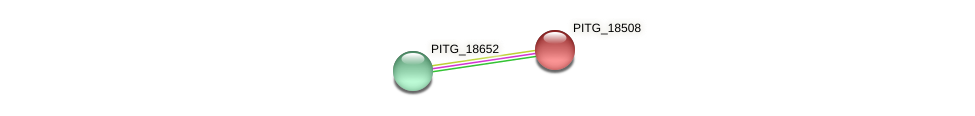 PITG_18508 protein (Phytophthora infestans) - STRING interaction network