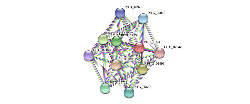 PITG_18539 protein (Phytophthora infestans) - STRING interaction network