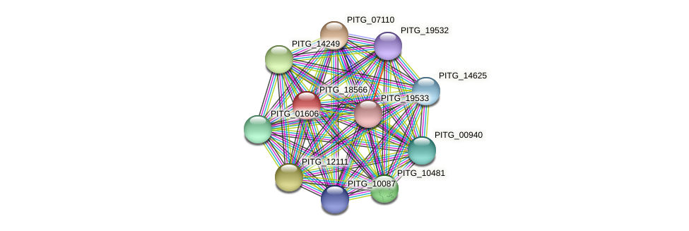 PITG_18566 protein (Phytophthora infestans) - STRING interaction network