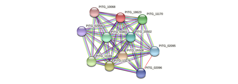 PITG_18623 protein (Phytophthora infestans) - STRING interaction network