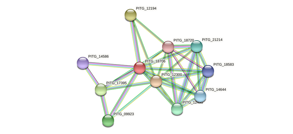 PITG_18706 protein (Phytophthora infestans) - STRING interaction network