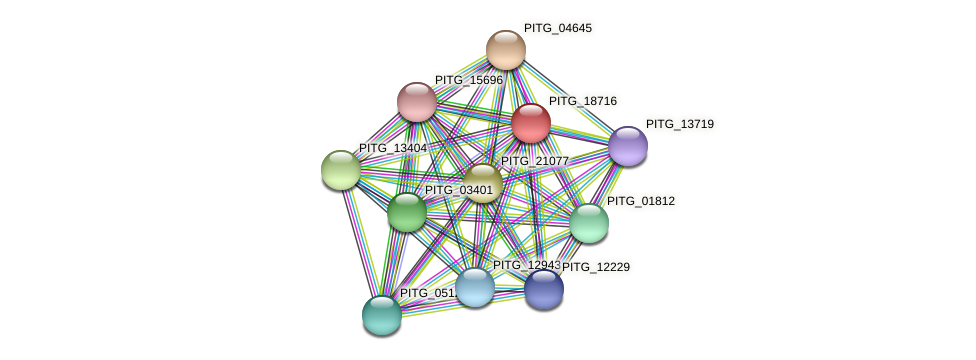 PITG_18716 protein (Phytophthora infestans) - STRING interaction network
