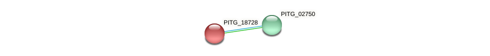 PITG_18728 protein (Phytophthora infestans) - STRING interaction network