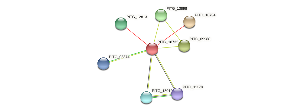 PITG_18732 protein (Phytophthora infestans) - STRING interaction network