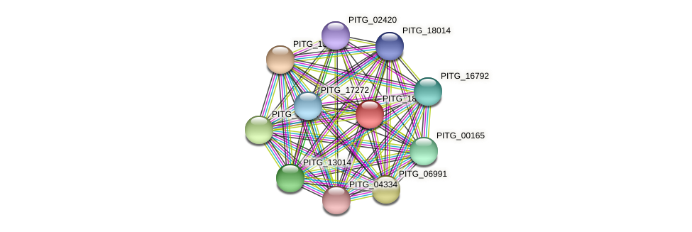 PITG_18755 protein (Phytophthora infestans) - STRING interaction network