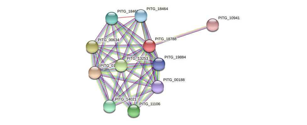 PITG_18788 protein (Phytophthora infestans) - STRING interaction network