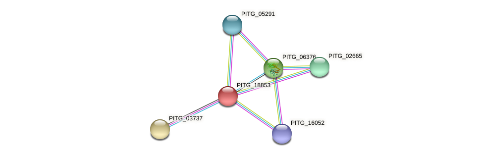 PITG_18853 protein (Phytophthora infestans) - STRING interaction network