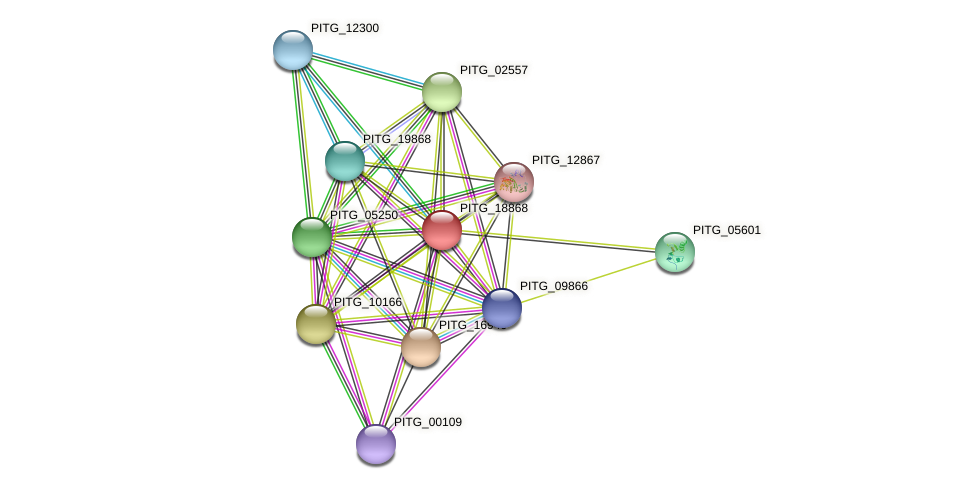 PITG_18868 protein (Phytophthora infestans) - STRING interaction network