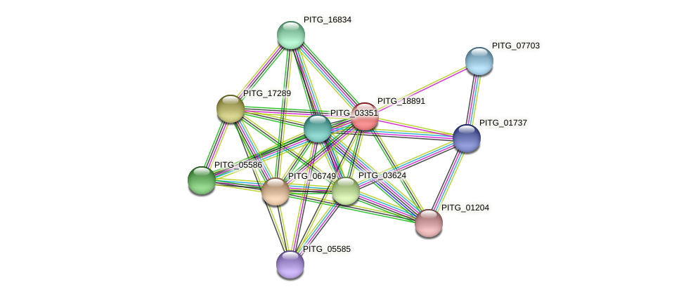 PITG_18891 protein (Phytophthora infestans) - STRING interaction network