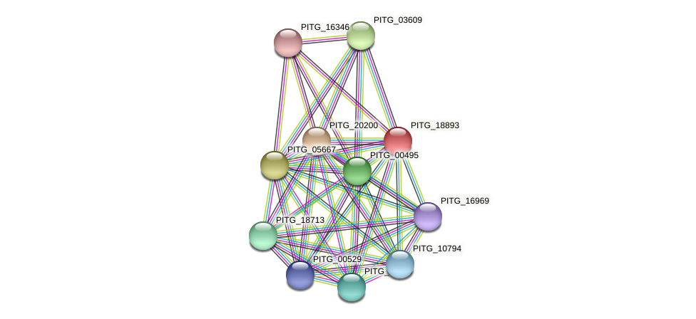 PITG_18893 protein (Phytophthora infestans) - STRING interaction network