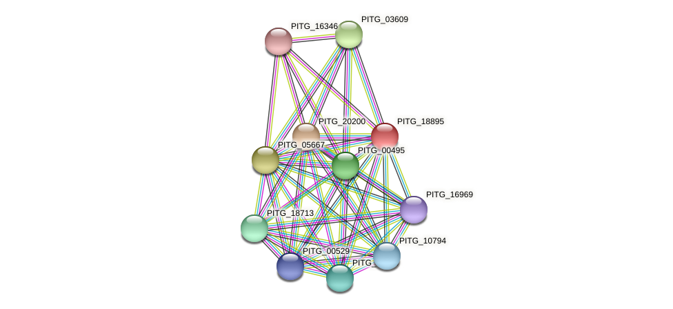 PITG_18895 protein (Phytophthora infestans) - STRING interaction network