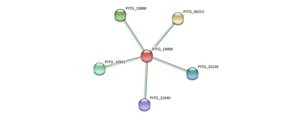 PITG_18999 protein (Phytophthora infestans) - STRING interaction network