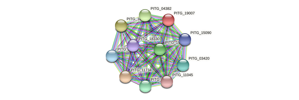 PITG_19007 protein (Phytophthora infestans) - STRING interaction network