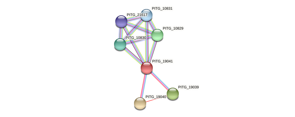 PITG_19041 protein (Phytophthora infestans) - STRING interaction network