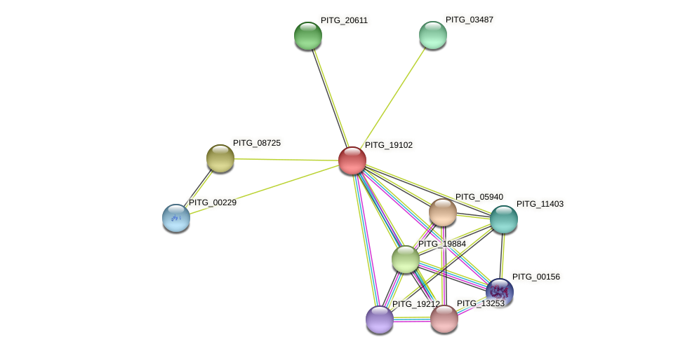 PITG_19102 protein (Phytophthora infestans) - STRING interaction network