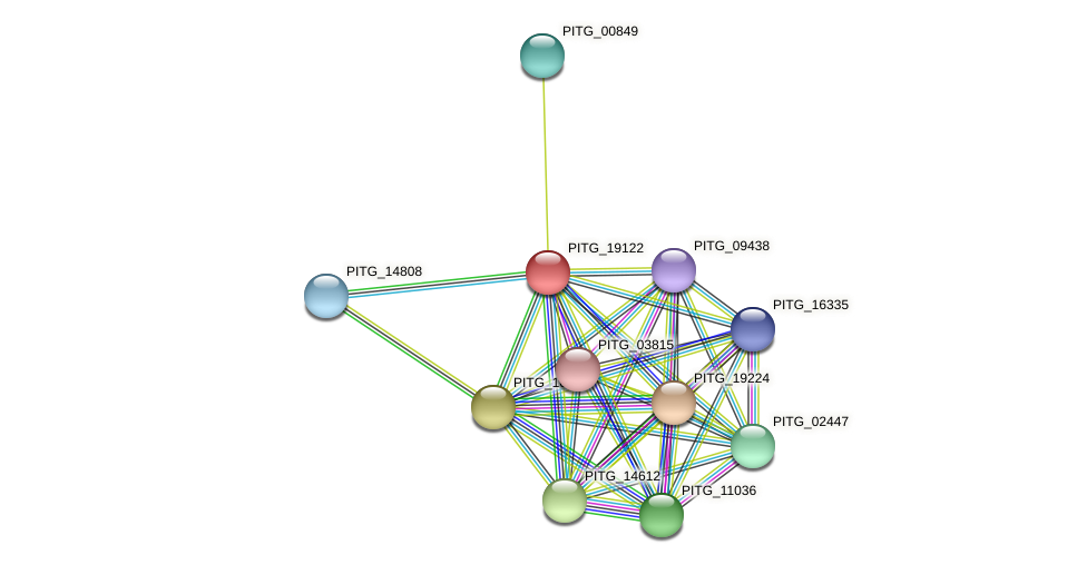 PITG_19122 protein (Phytophthora infestans) - STRING interaction network