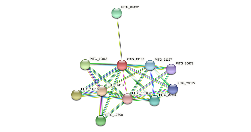PITG_19148 protein (Phytophthora infestans) - STRING interaction network