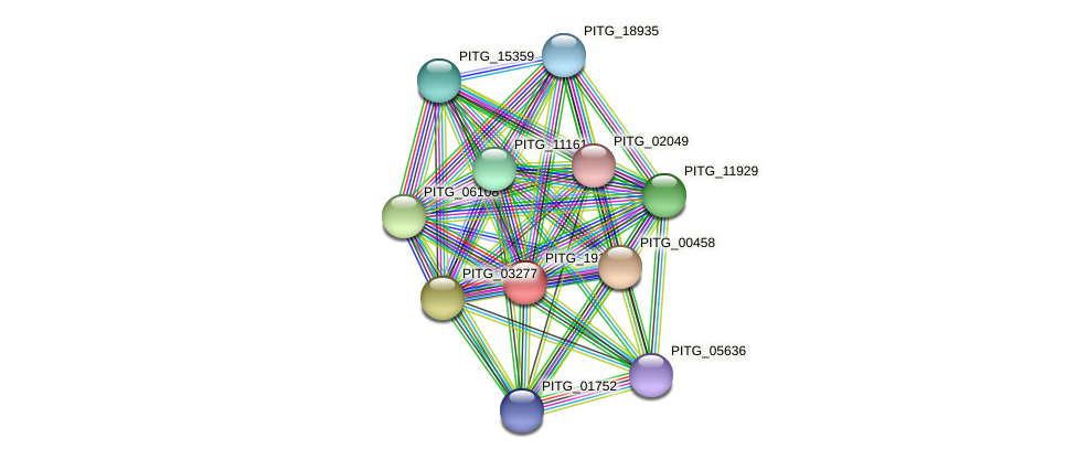 PITG_19161 protein (Phytophthora infestans) - STRING interaction network