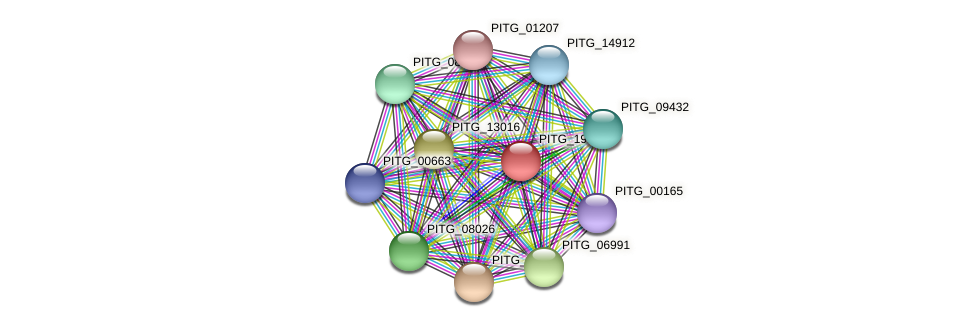 PITG_19163 protein (Phytophthora infestans) - STRING interaction network
