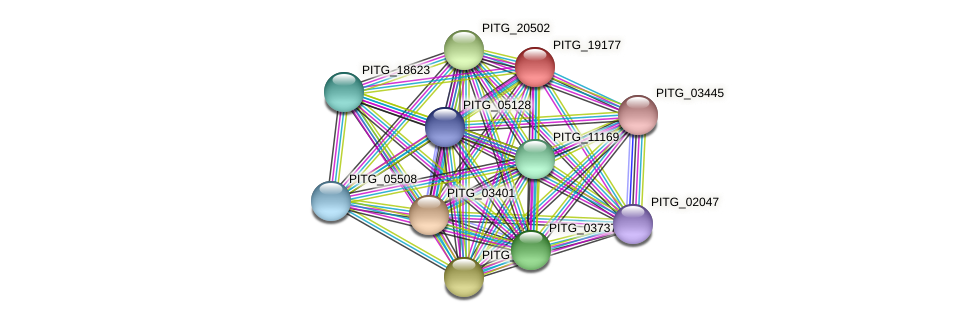 PITG_19177 protein (Phytophthora infestans) - STRING interaction network