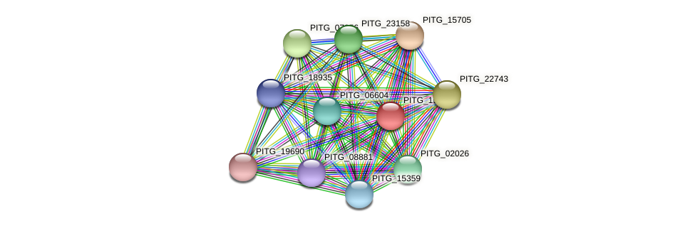 PITG_19191 protein (Phytophthora infestans) - STRING interaction network
