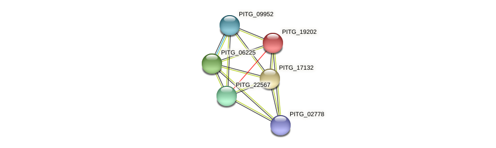 PITG_19202 protein (Phytophthora infestans) - STRING interaction network