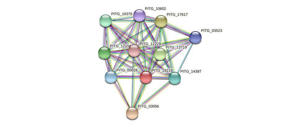 PITG_19219 protein (Phytophthora infestans) - STRING interaction network