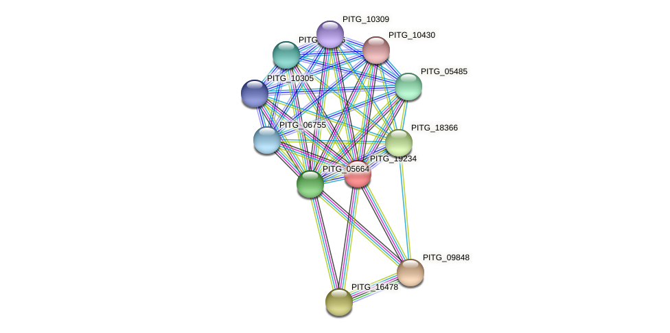 PITG_19234 protein (Phytophthora infestans) - STRING interaction network
