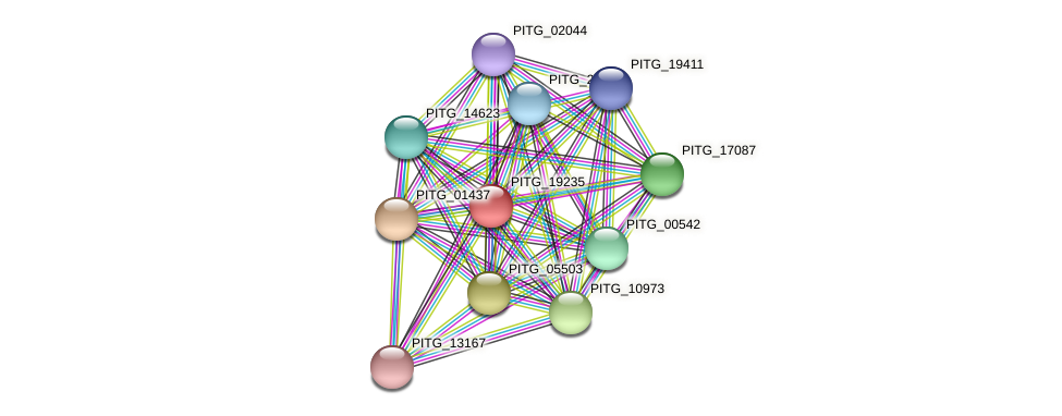 PITG_19235 protein (Phytophthora infestans) - STRING interaction network