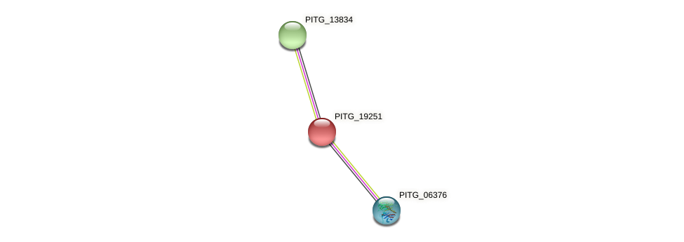 PITG_19251 protein (Phytophthora infestans) - STRING interaction network