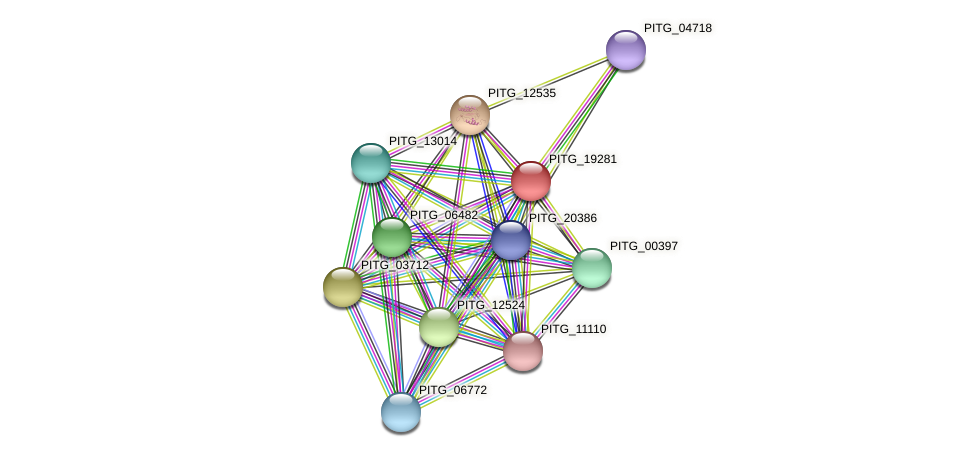 PITG_19281 protein (Phytophthora infestans) - STRING interaction network