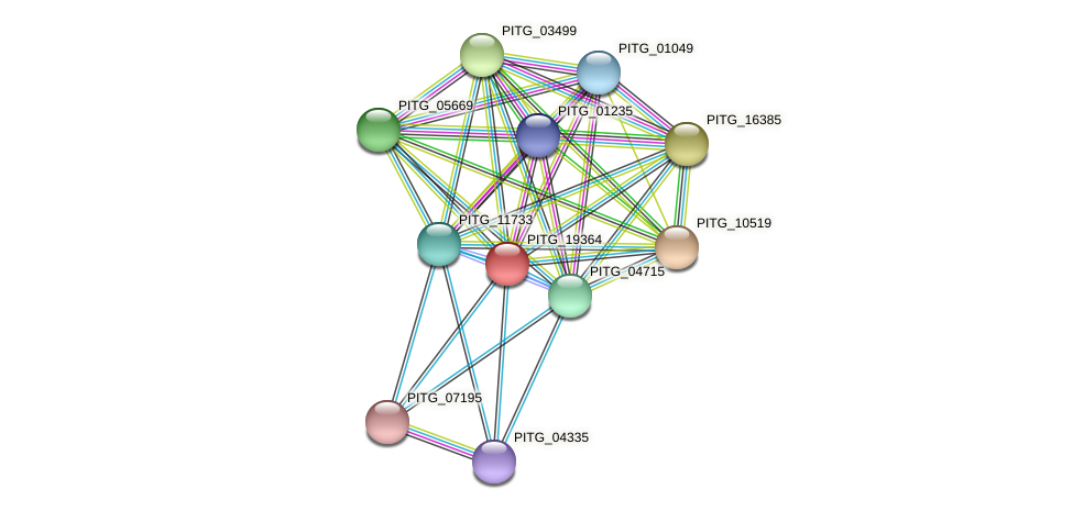 PITG_19364 protein (Phytophthora infestans) - STRING interaction network