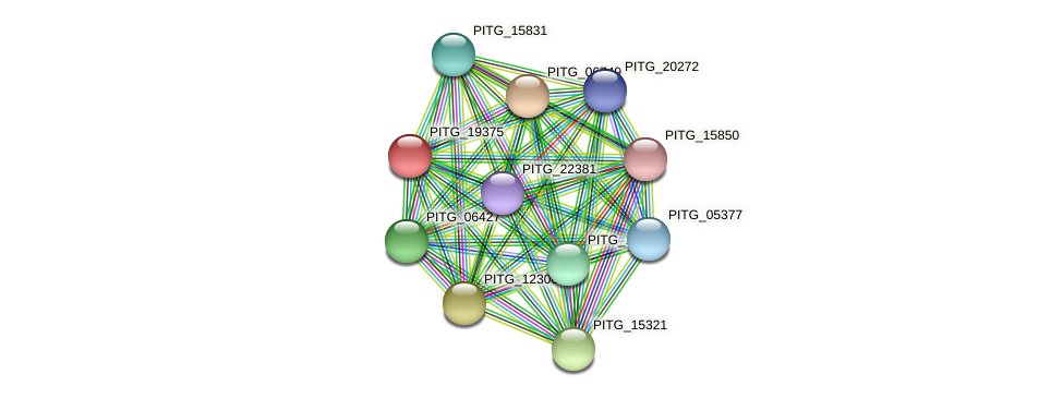 PITG_19375 protein (Phytophthora infestans) - STRING interaction network