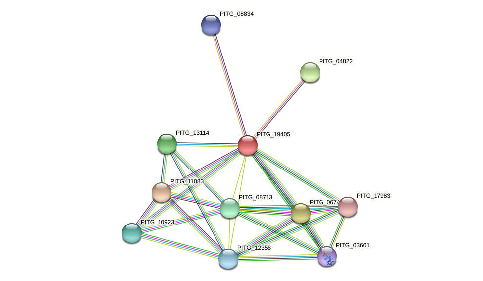 PITG_19405 protein (Phytophthora infestans) - STRING interaction network