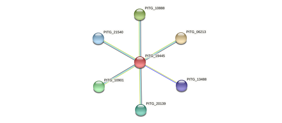 PITG_19445 protein (Phytophthora infestans) - STRING interaction network