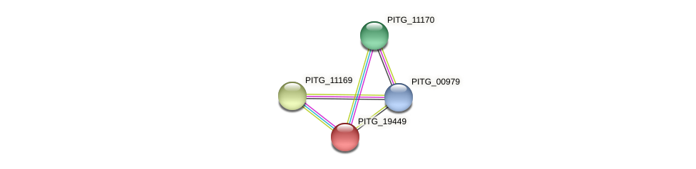 PITG_19449 protein (Phytophthora infestans) - STRING interaction network