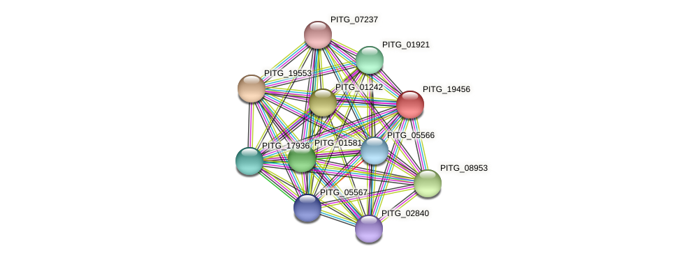 PITG_19456 protein (Phytophthora infestans) - STRING interaction network